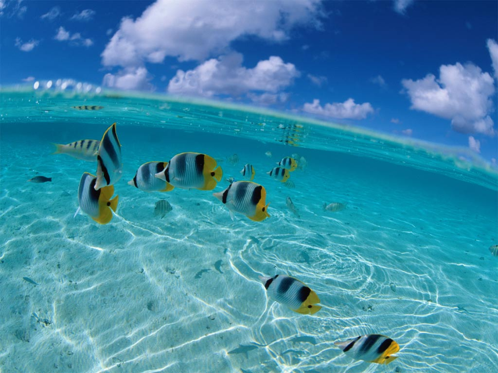 Relaxing photo of tropical fish in bright blue water