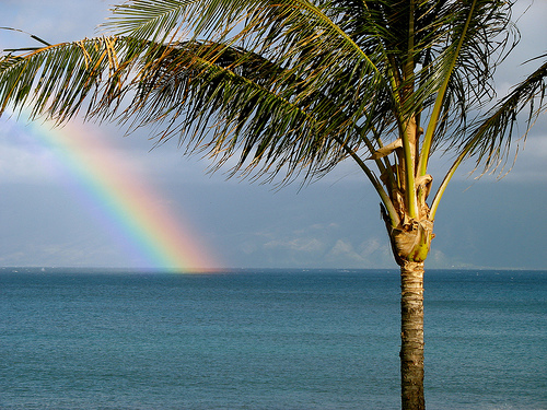 """Maui Rainbow with Palm Tree"" by rhettmaxwell @ flickr"