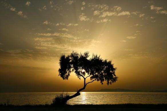 """Tree of light"" by esther** original @ flickr: http://www.flickr.com/photos/esther-/2516424698/"